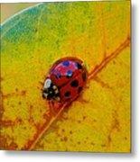 Lady Bug 3 Metal Print