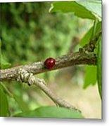 Lady Bug Branch Metal Print
