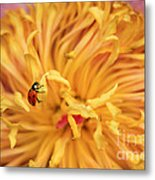 Lady Bug Metal Print by Darren Fisher