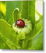 Lady Bug In The Garden Metal Print