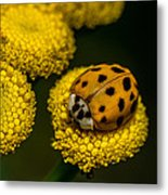 Lady Bug Metal Print