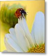 lady Bug Metal Print by Scott Gould