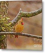 Lady Cardinal Metal Print