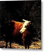 Lady Cow Metal Print