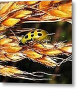 Lady Of A Different Color... Metal Print