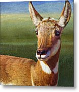 Lady Pronghorn Metal Print