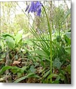 Lady Spencer's Bluebell Metal Print
