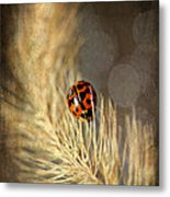 Ladybird Metal Print by Darren Fisher