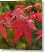 Ladybird With Autumn Leaves Metal Print