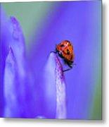 Ladybug Adventure Metal Print