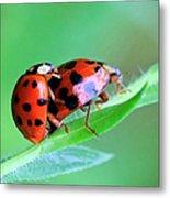 Ladybug And Gentlemanbug Metal Print