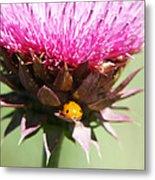 Ladybug And Thistle Metal Print