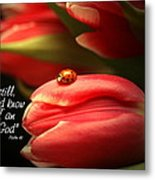 Ladybug And Tulip Metal Print by Linda Fowler