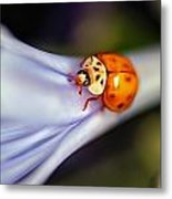 Ladybug Art Metal Print by Tammy Smith