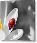 Ladybug Black And White In Colorkey Metal Print