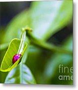 Ladybug Cup Metal Print