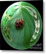 Ladybug Eating Aphids Metal Print