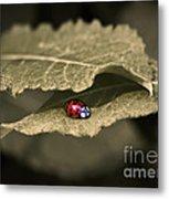 Ladybug Metal Print by Nora Blansett