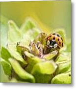 Ladybug On A Bud Metal Print