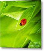 Ladybug On Leaves Metal Print