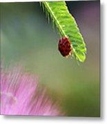 Ladybug With Mimosa Metal Print