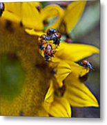 Ladybugs Close Up Metal Print