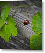 Ladybugs Mating Metal Print
