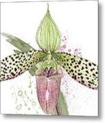 Ladys Slipper - Orchid 16n - Elena Yakubovich Metal Print