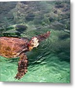 Lager Head Turtle 002 Metal Print