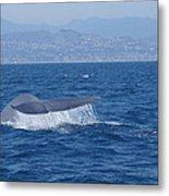 Laguna Whale Metal Print