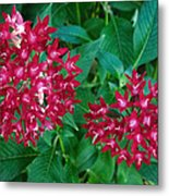Lahaina Flowers 1 Metal Print