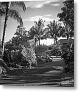 Lahaina Palm Shadows Metal Print
