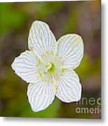Lake Huron Wildflower Metal Print