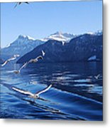 Lake Lucerne Seagulls Metal Print