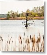 Lake Mattamuskeet Nature Trees And Lants In Spring Time  Metal Print