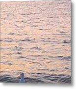 Lake Michigan Sunset With Birds Metal Print