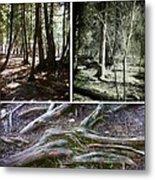 Lake Superior Hiking Trail Metal Print