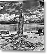 Lake Tenaya Giant Stump Black And White Metal Print