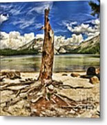 Lake Tenaya Giant Stump Metal Print