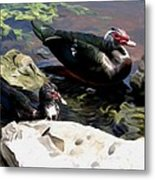 Lake Toho Ducks Metal Print
