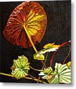 Lake Washington Lily Pad 18 Metal Print