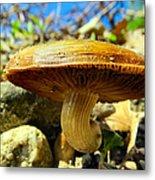 Lakeside Mushroom  Metal Print