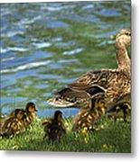 Lakeside Stroll 9836 Metal Print
