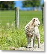 Lamb On The Farm Metal Print