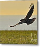 Land Sea And Sky Metal Print by Amy Fearn