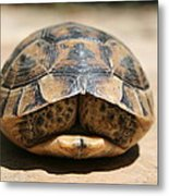 Land Turtle Hiding In Its Shell  Metal Print