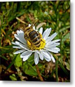 Daisy And Bee Metal Print