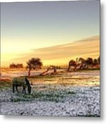Landscape And Horse Metal Print