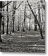 Landscape In The Woods Metal Print