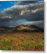Landscape Of Poppy Fields In Front Of Mountain Range With Dramat Metal Print
